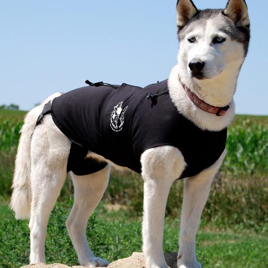 Anxiety Wrap: Dog Supplies | eBay