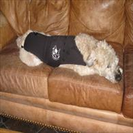 Wheaten Terrier Wearing Anxiety Wrap